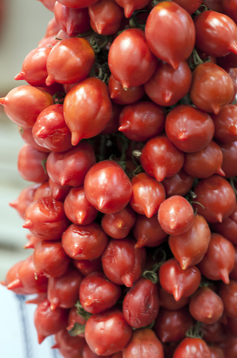Presidia Pomodori