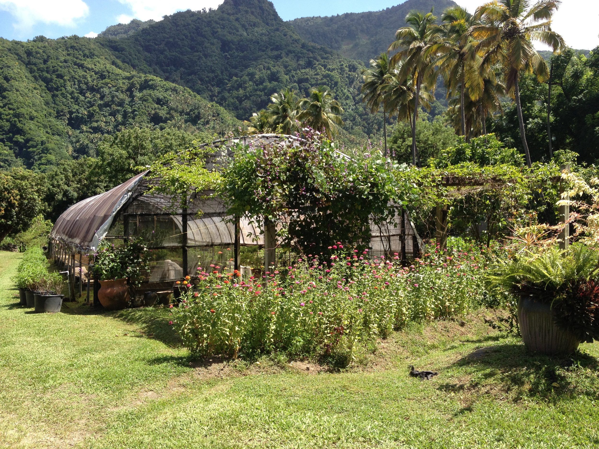 The greenhouses at Emerald Estate Farm at Jade Mountain