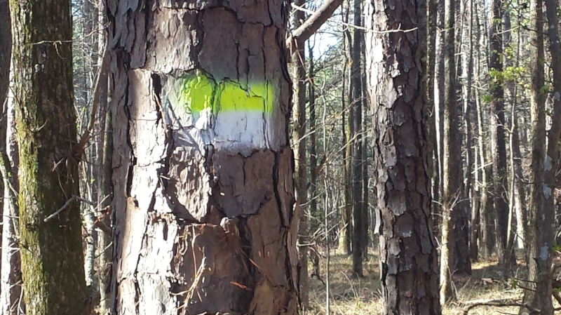 The color blaze on the trees indicate which trail you are hiking