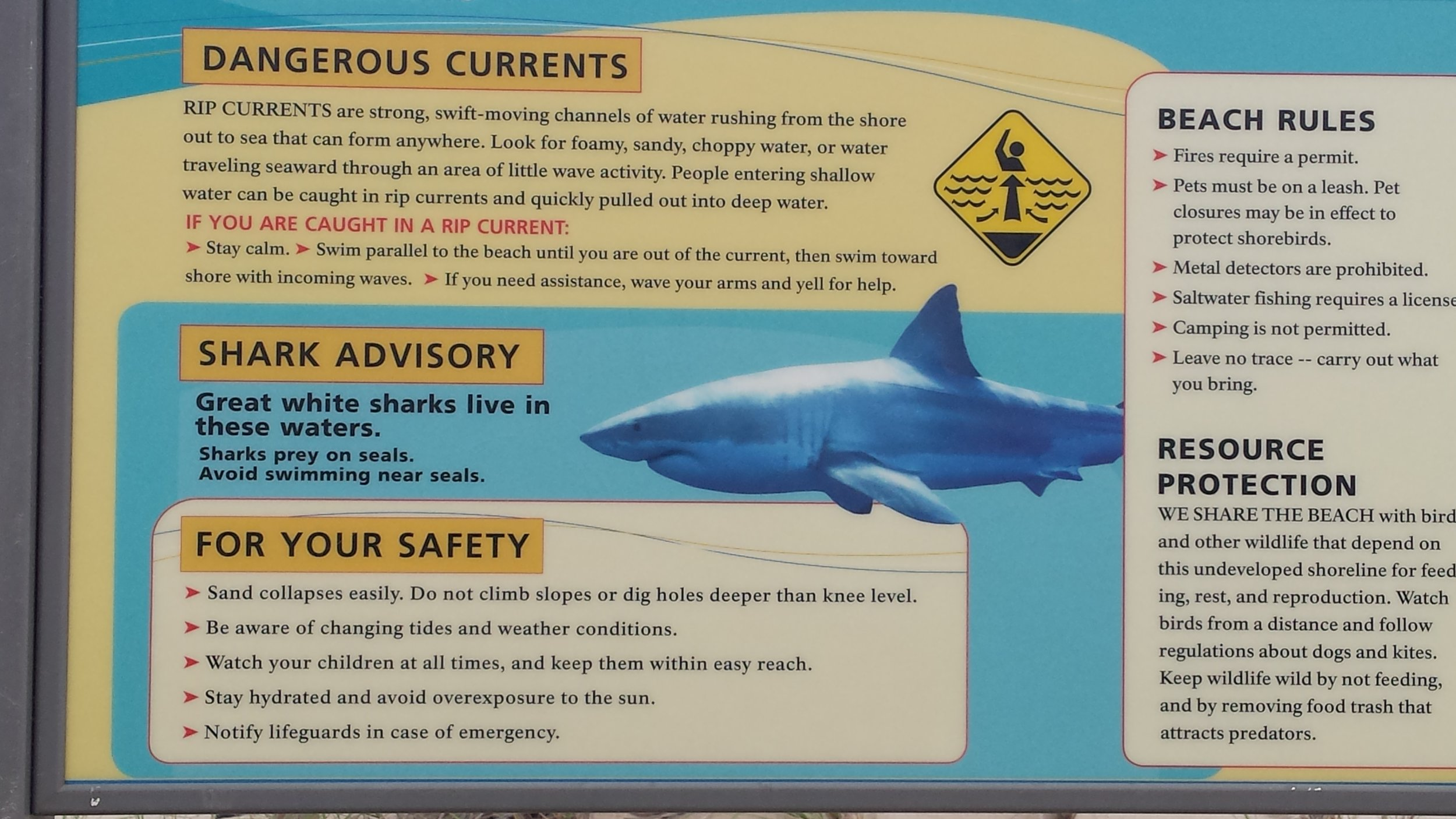 Yikes! Great White Sharks?!