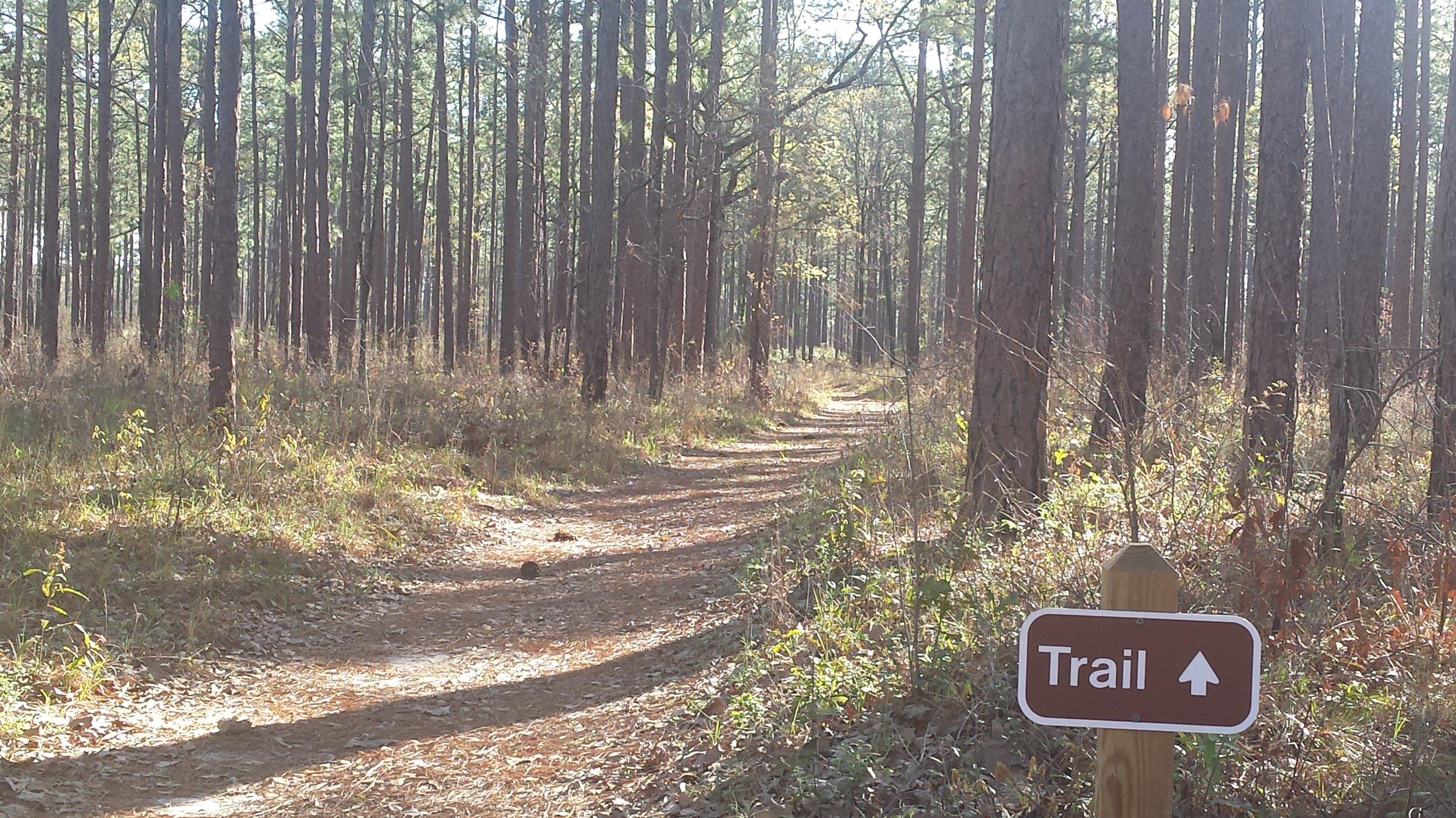 trail-at-seminole-state-park.jpg