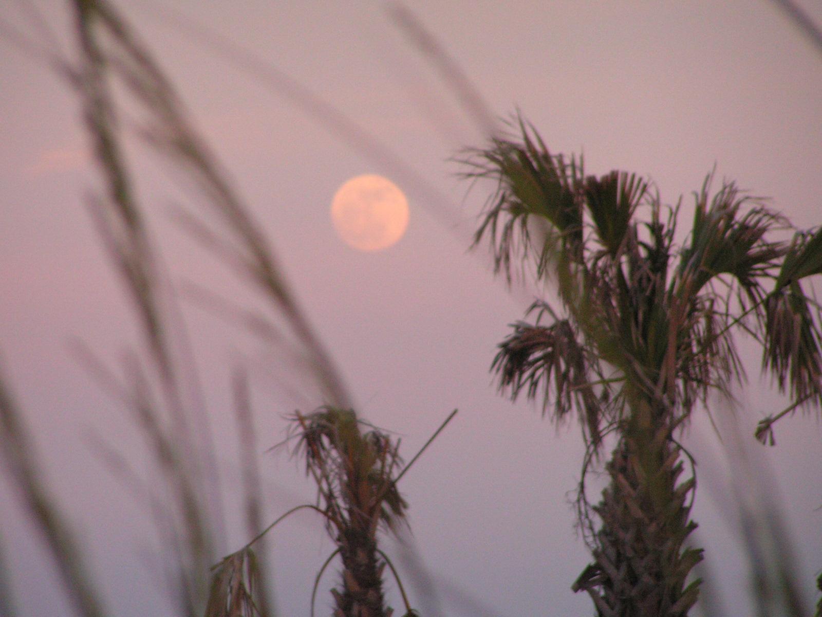 moon-rise.jpg