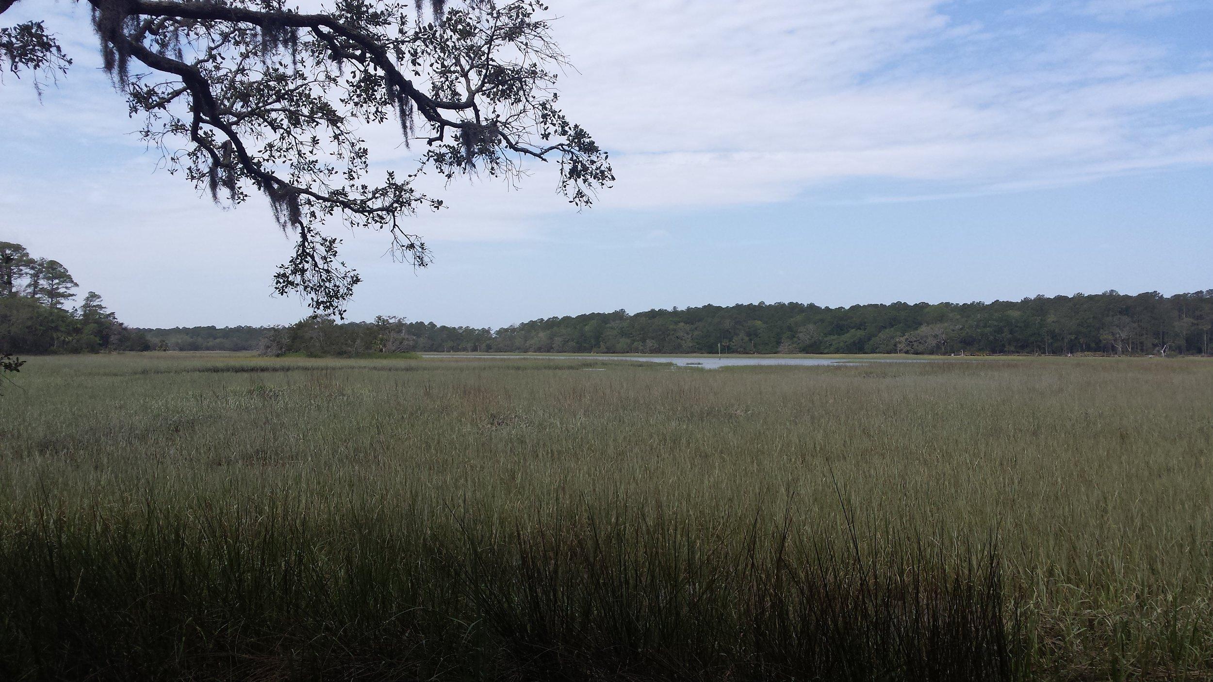 View of the salt marsh on Skidaway Island