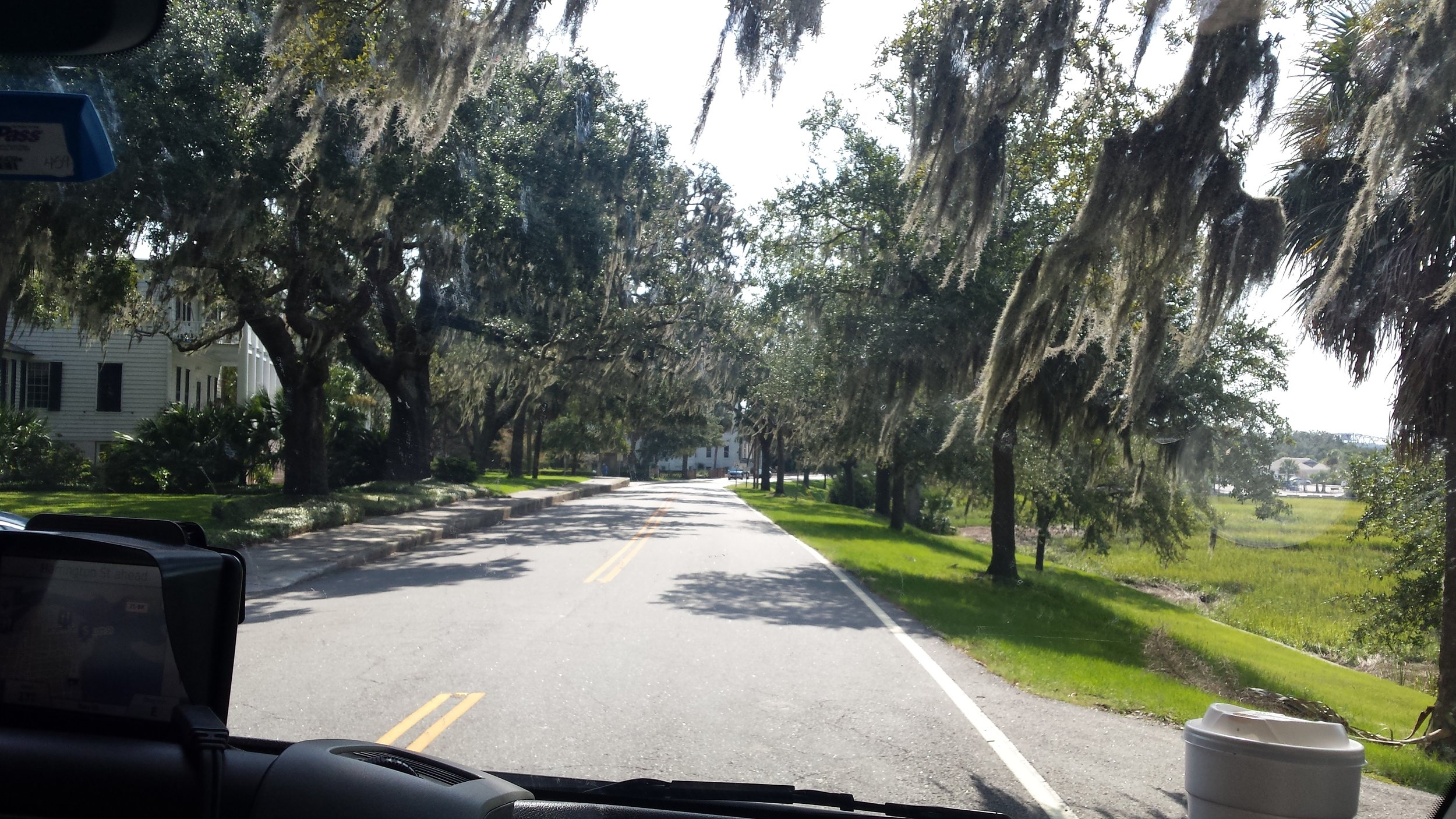 Spanish moss-draped trees in Beaufort, SC