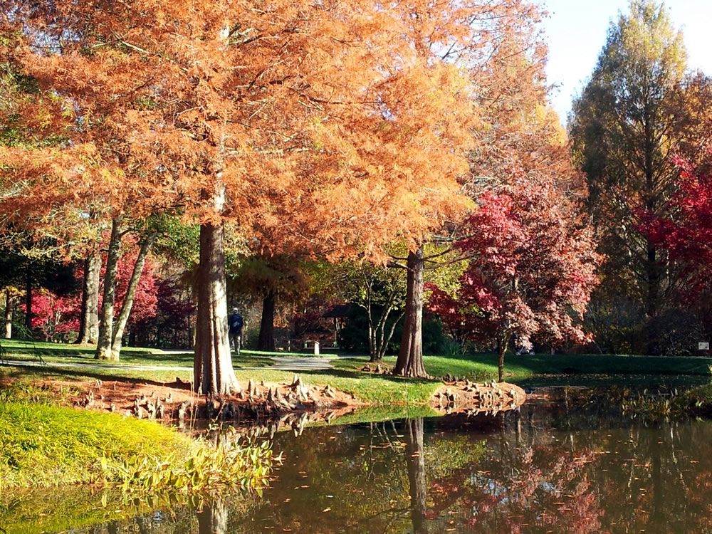 autumn-in-georgia.jpg