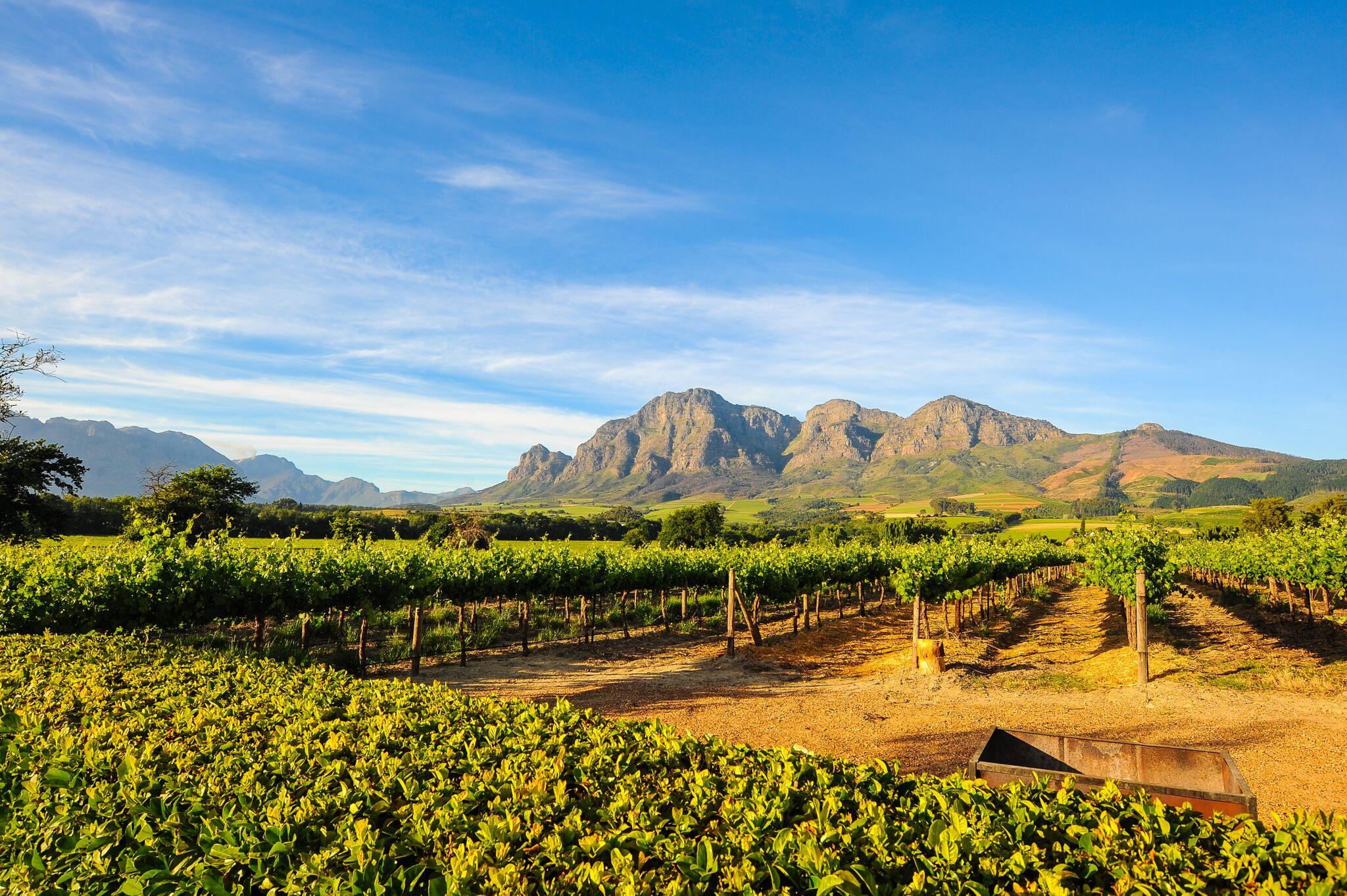 Südafrika-weinanbau.jpg