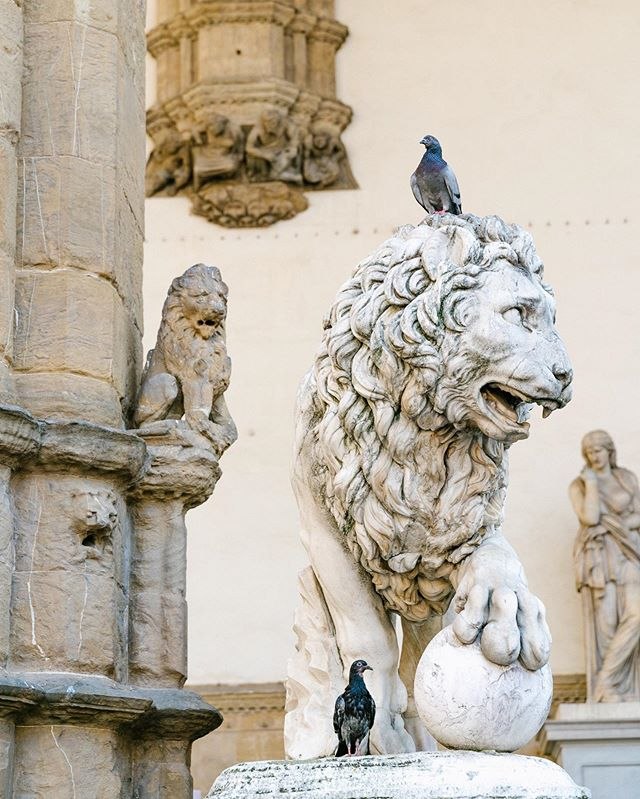 #florence #italie #italy #lion #firenze