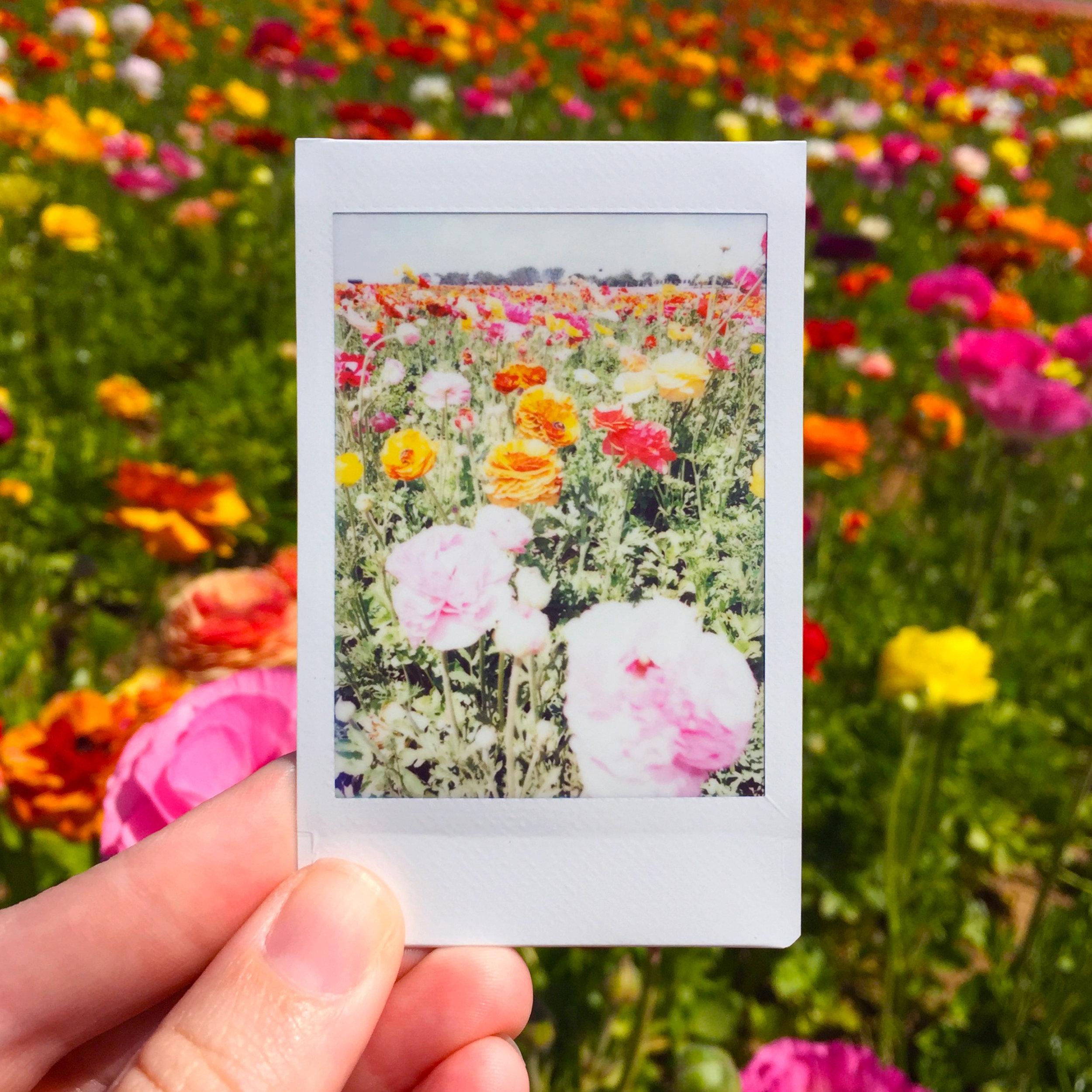 FLOWR FIELDS.jpg
