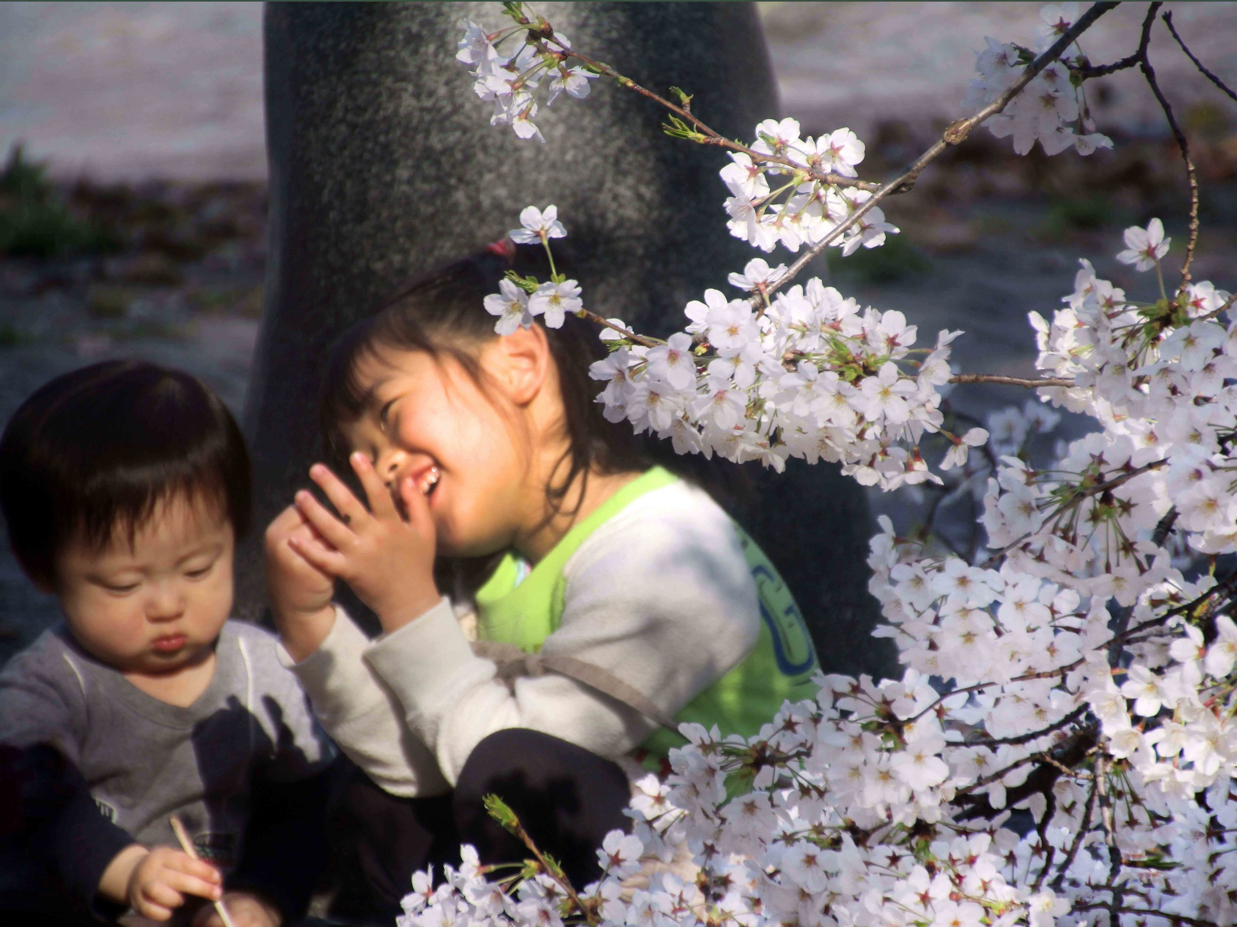 WEB-Japan,-Nagoya-Palace,-Children-at-Play-Under-the-Cherry-Blossoms.jpg