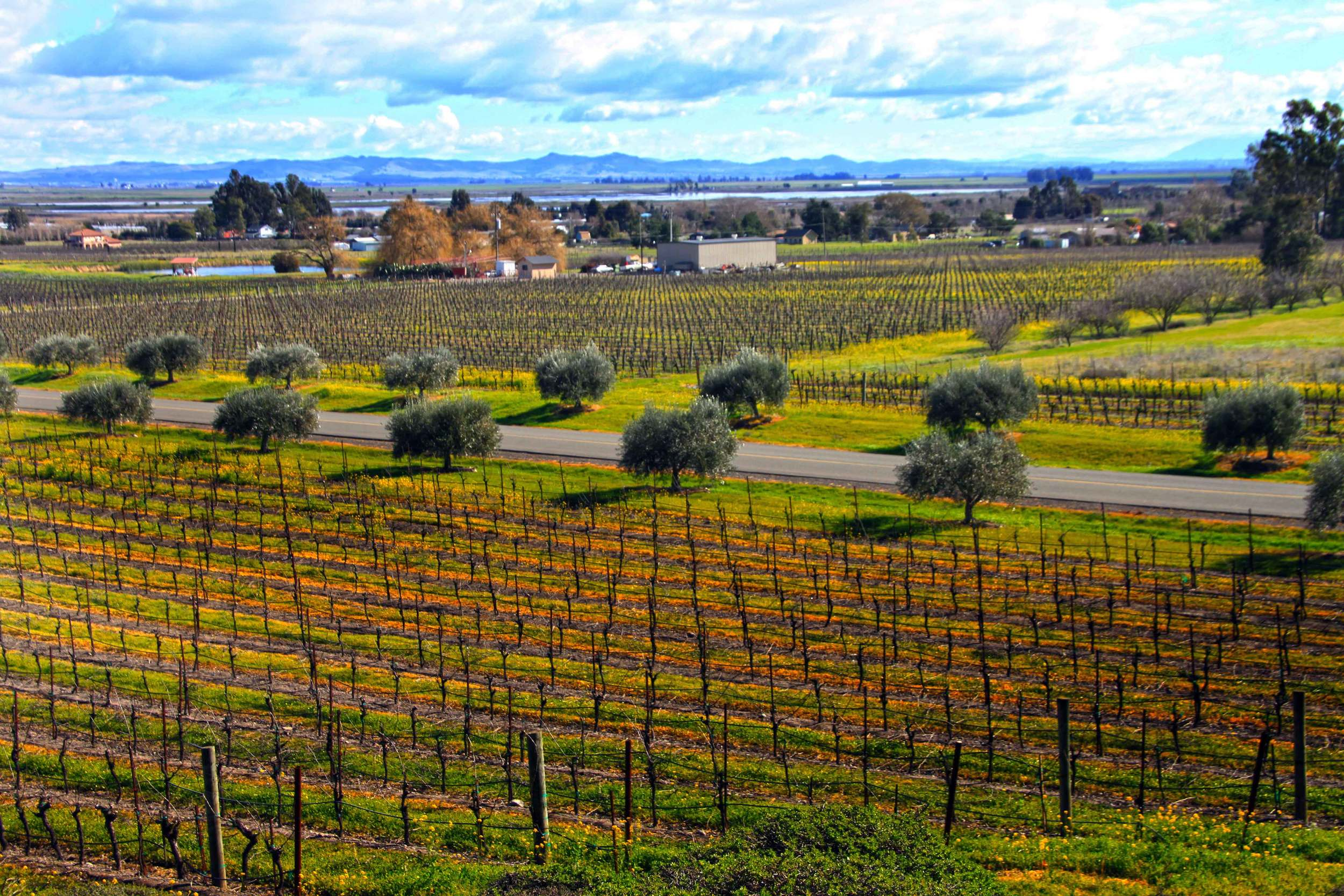 View on Sonoma Valley from Gloria Ferrer Winery   © Joanne DiBona