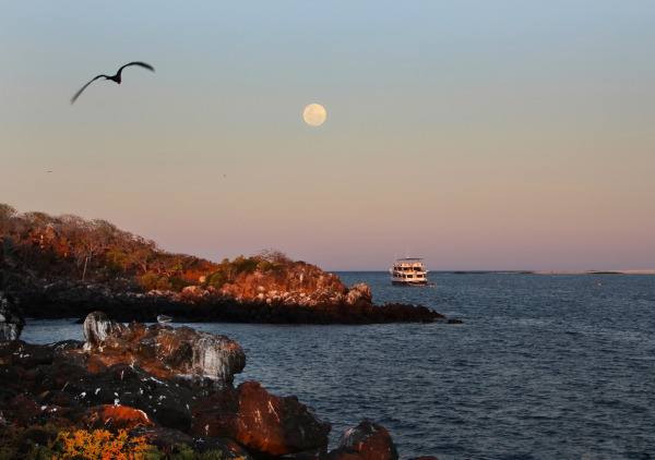Galapagos Islands, Ecoventure Cruise Yacht, North Seymour.jpg