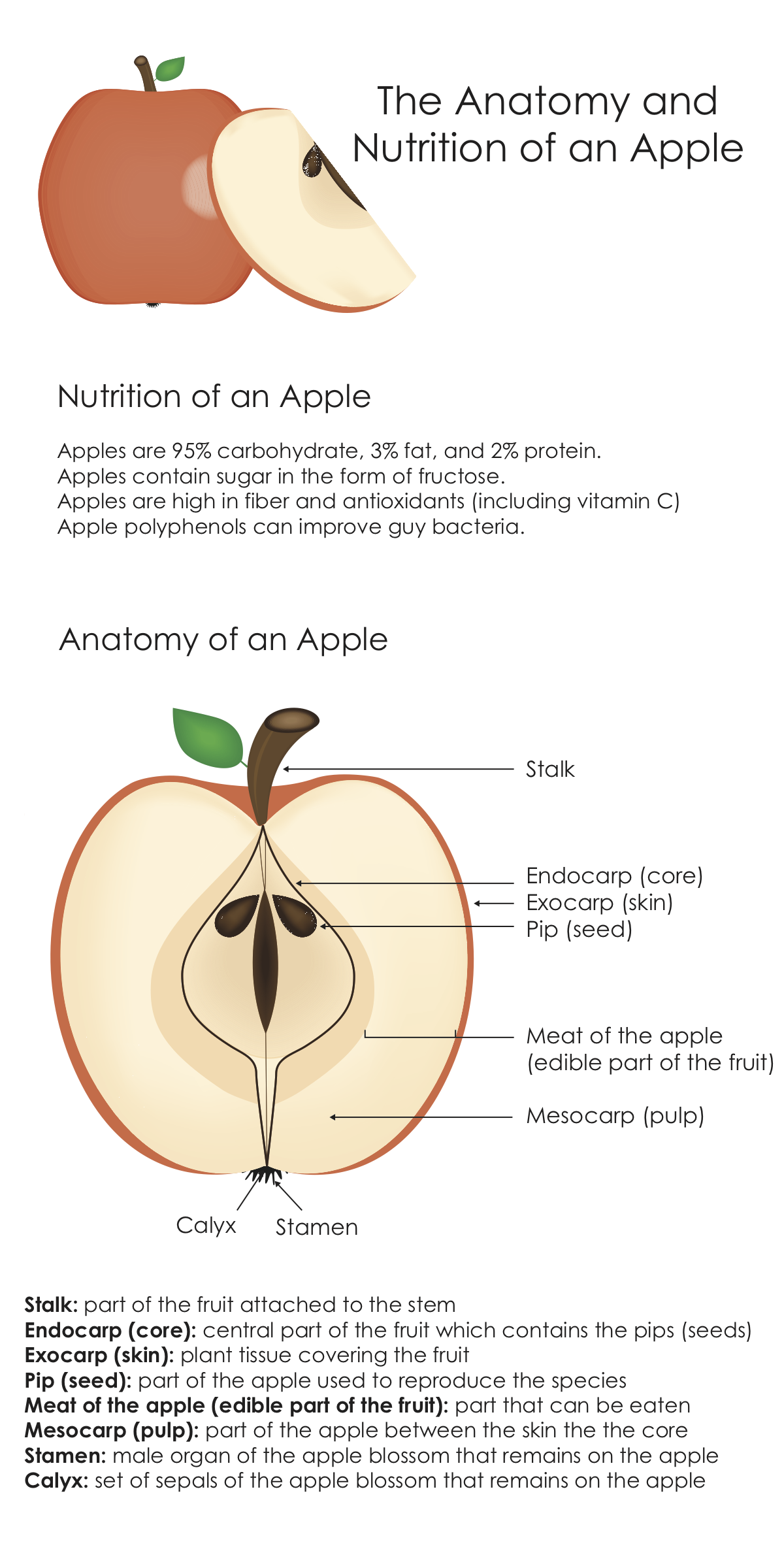 Anatomy and Nutrition of an Apple.png
