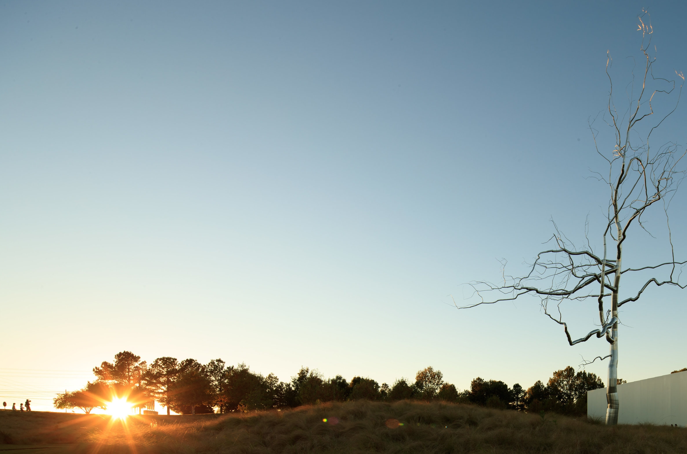 NCMA Landscape.jpg