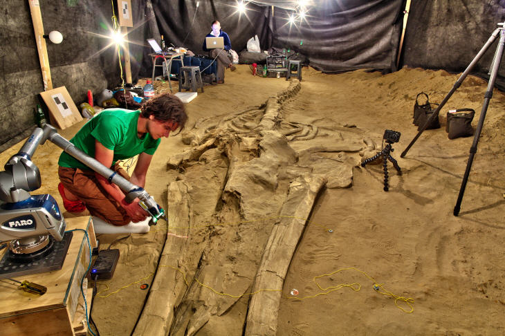 3D scanning using a high-resolution laser arm and mid-range surface scanners on a fossil rorqual (MPC 677) from Cerro Ballena in 2011. Source: The Smithsonian