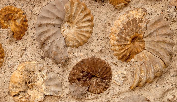 3D printed fossils. Source: Jane Rix /Shutterstock.com