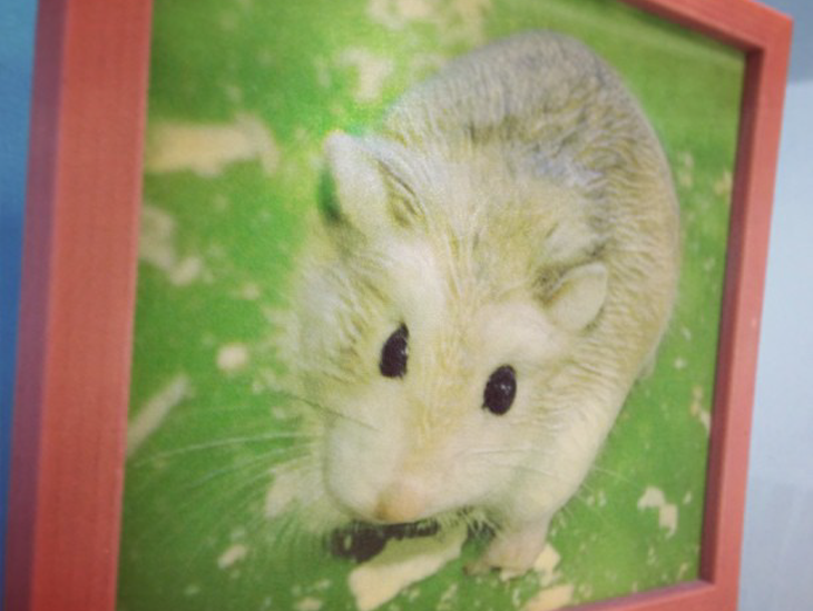 3D printed pet plaque-hamster. Source: WhiteClouds