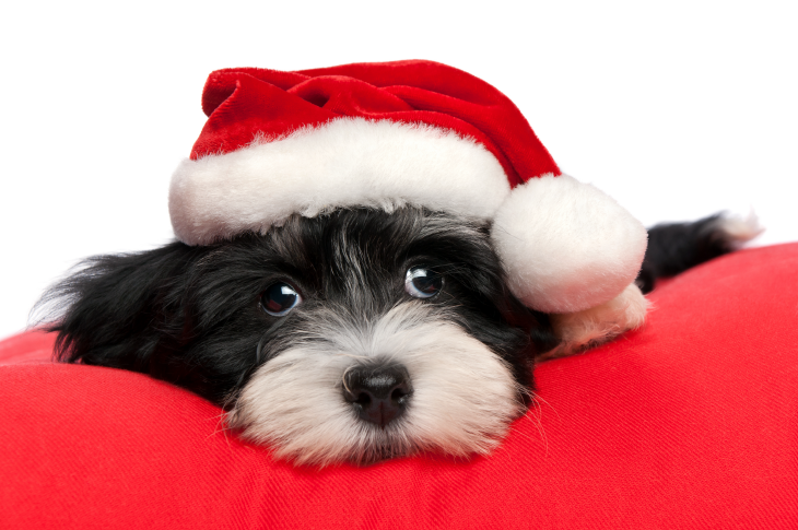 3D Printed Christmas puppy with a stocking hat. Source: Dorottya Mathe/Shutterstock.com