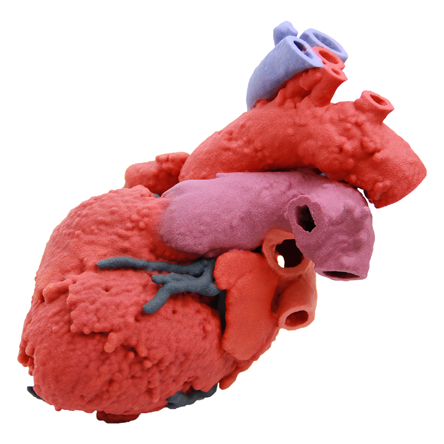 60107-Heart Blood Flow.png