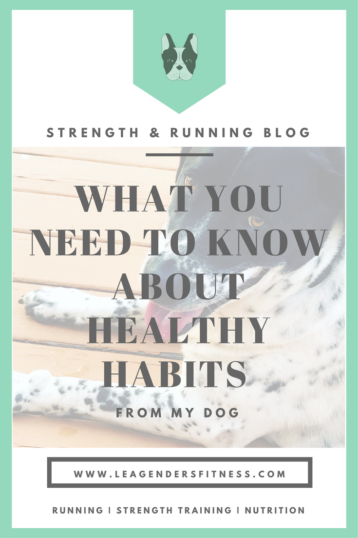 HEALTHY HABITS FROM MY DOG.png