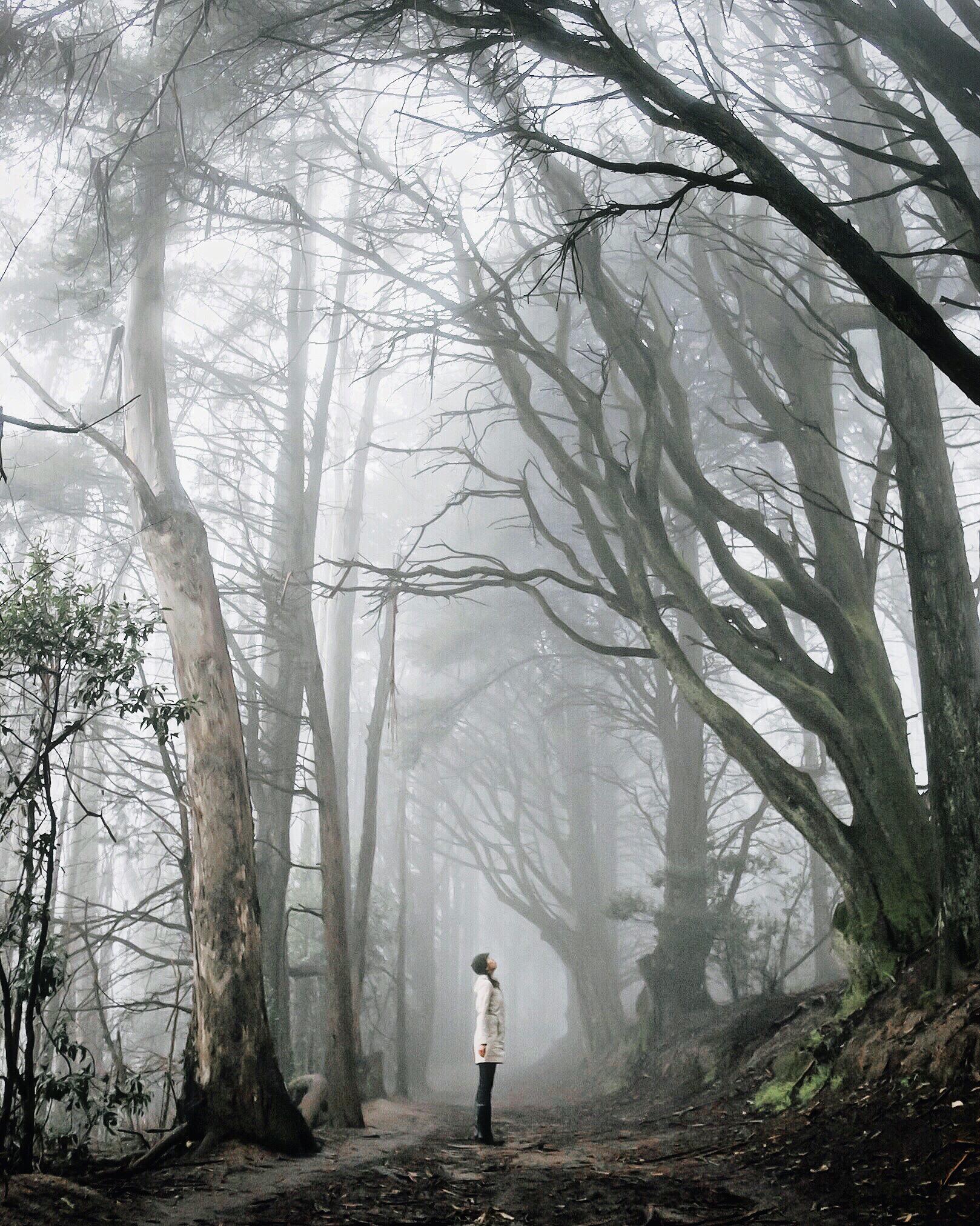 redwoodregional-vivianchen4.jpg