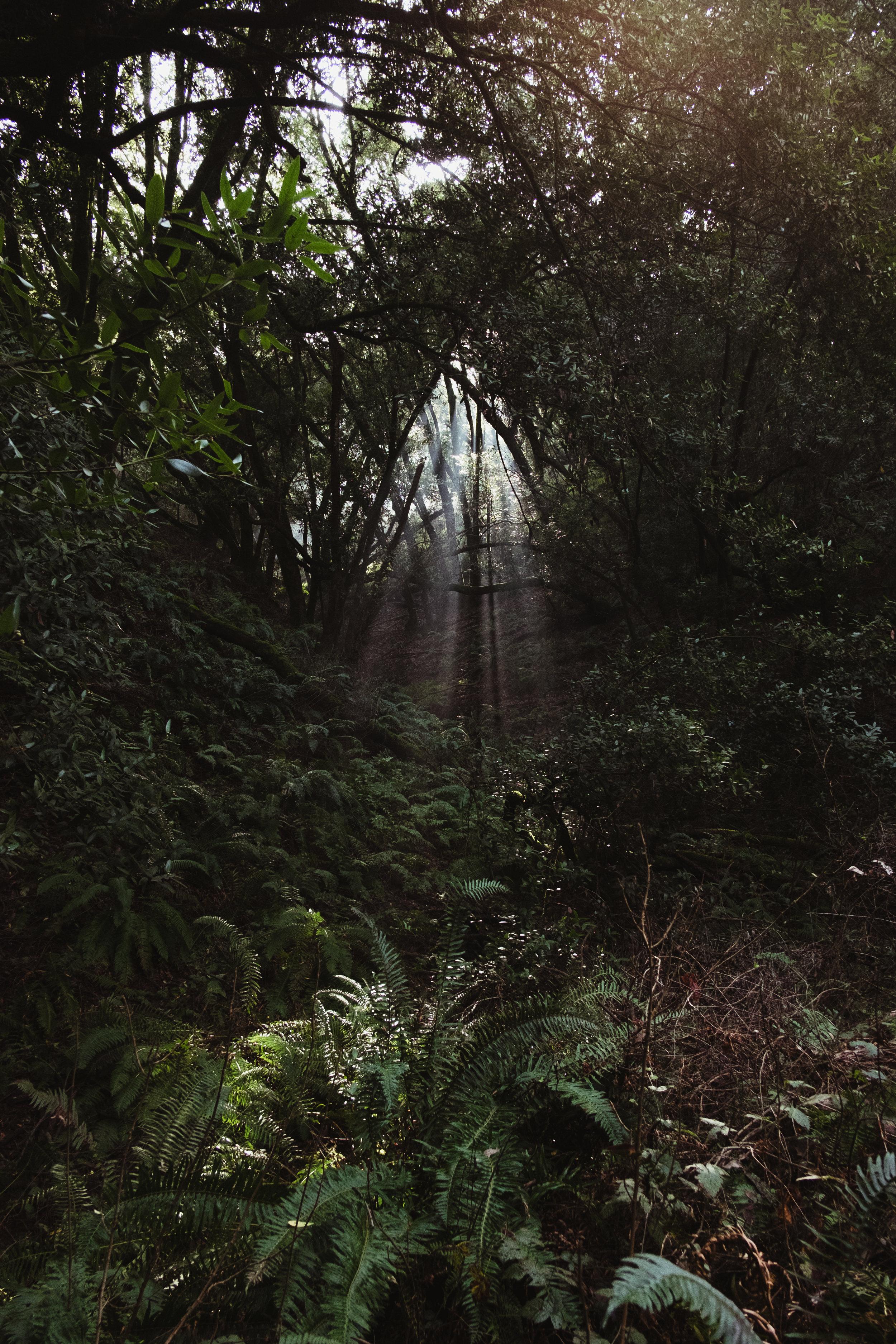 redwood-vivianchen-4141.jpg