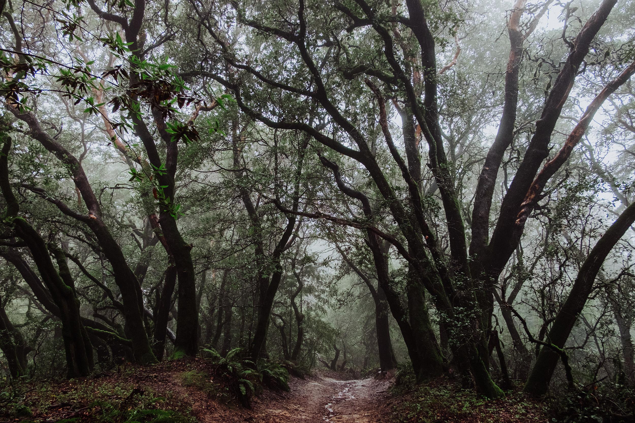 redwoodregional-vivianchen-4279b.jpg