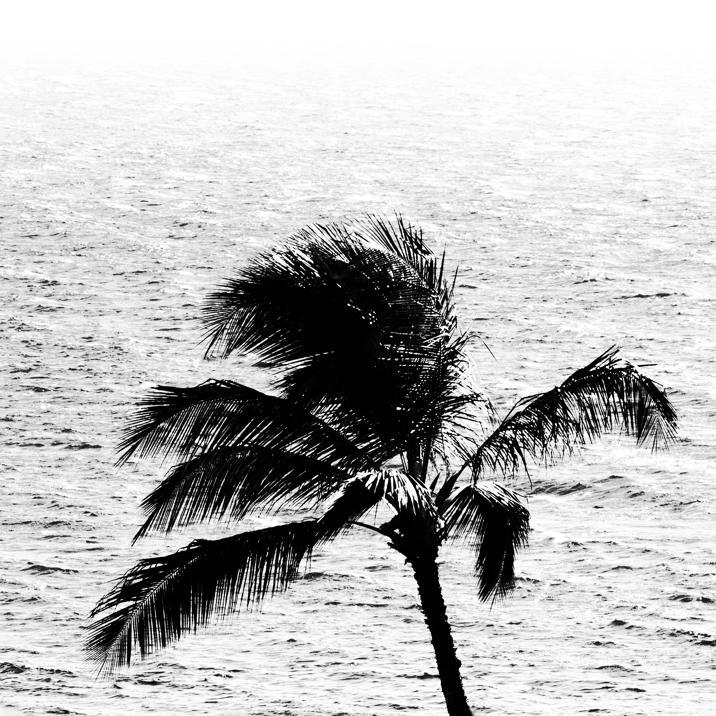 palm_ocean_reduced.jpg