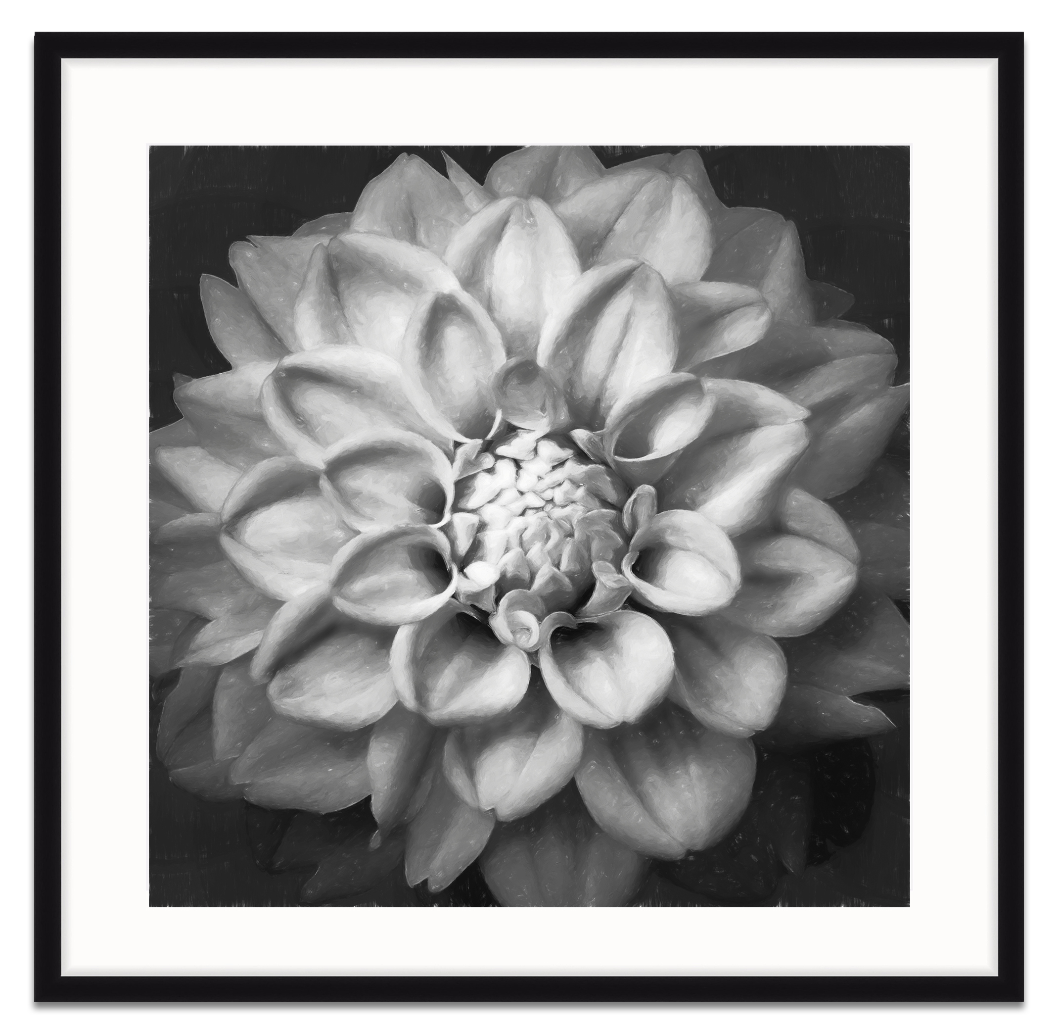 dahlia on black framed.jpg