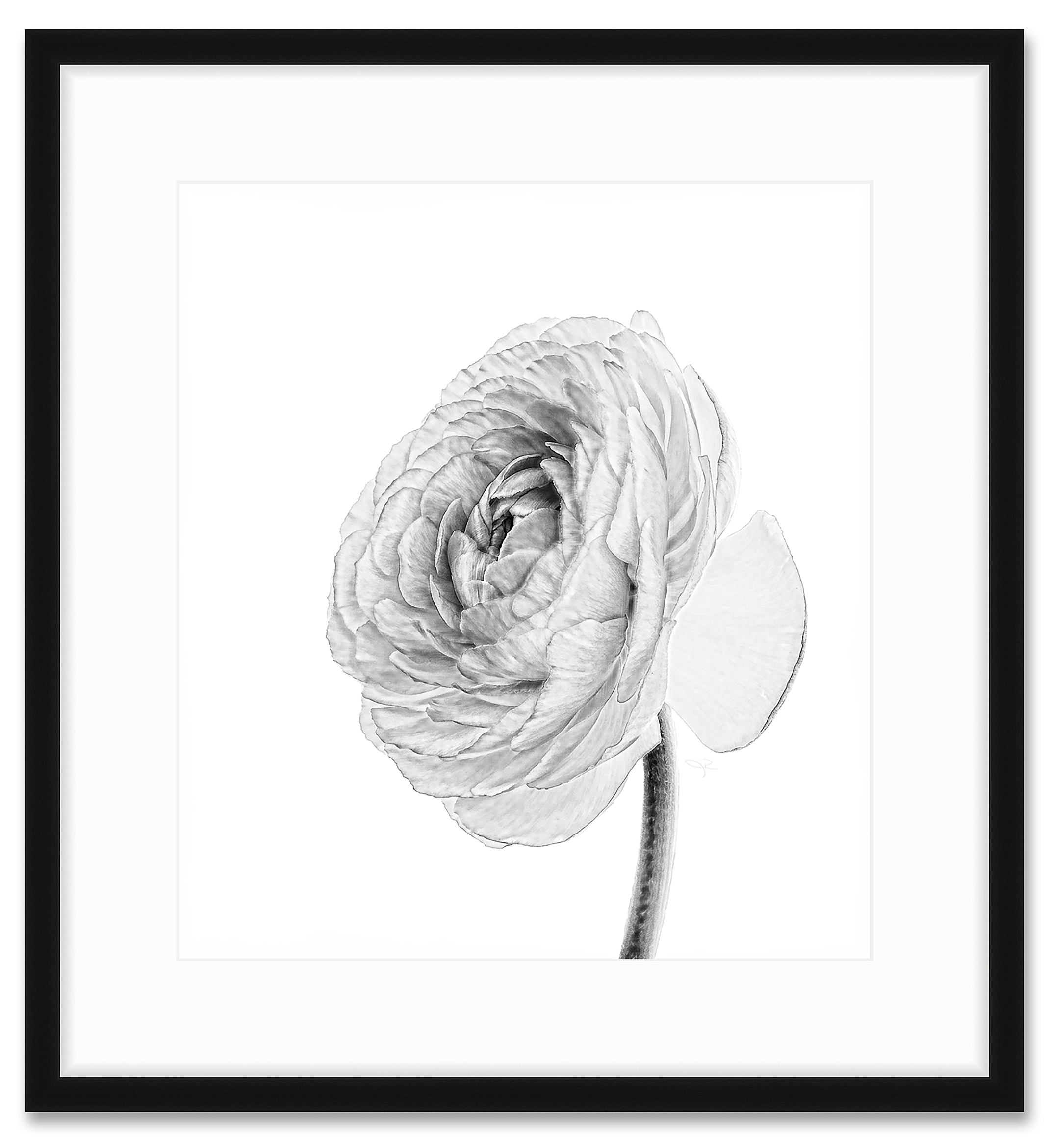 black-and-white-ranunculus-framed-2139px.jpg