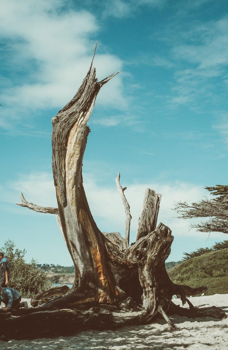 visit-carmel-california-holiday-destination-5.jpg
