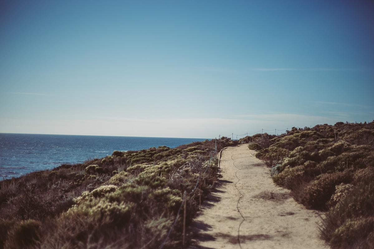 point-lobos-california-20.jpg