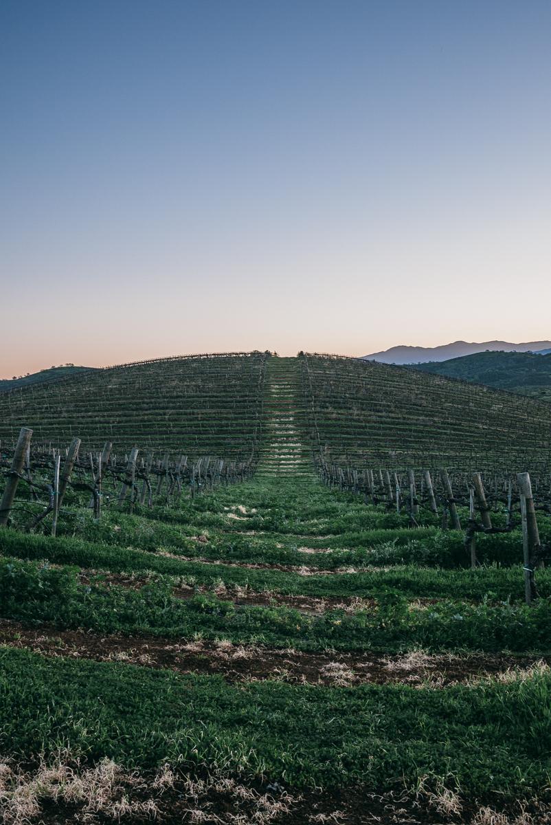 chalone-vineyards-soledad-monterey-getaway-10.jpg