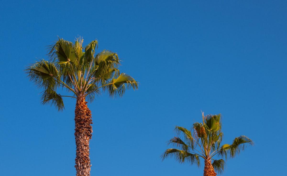 mybelonging-tommylei-warbyparker-palmcanyoncollection-abbotkinney-10.jpg