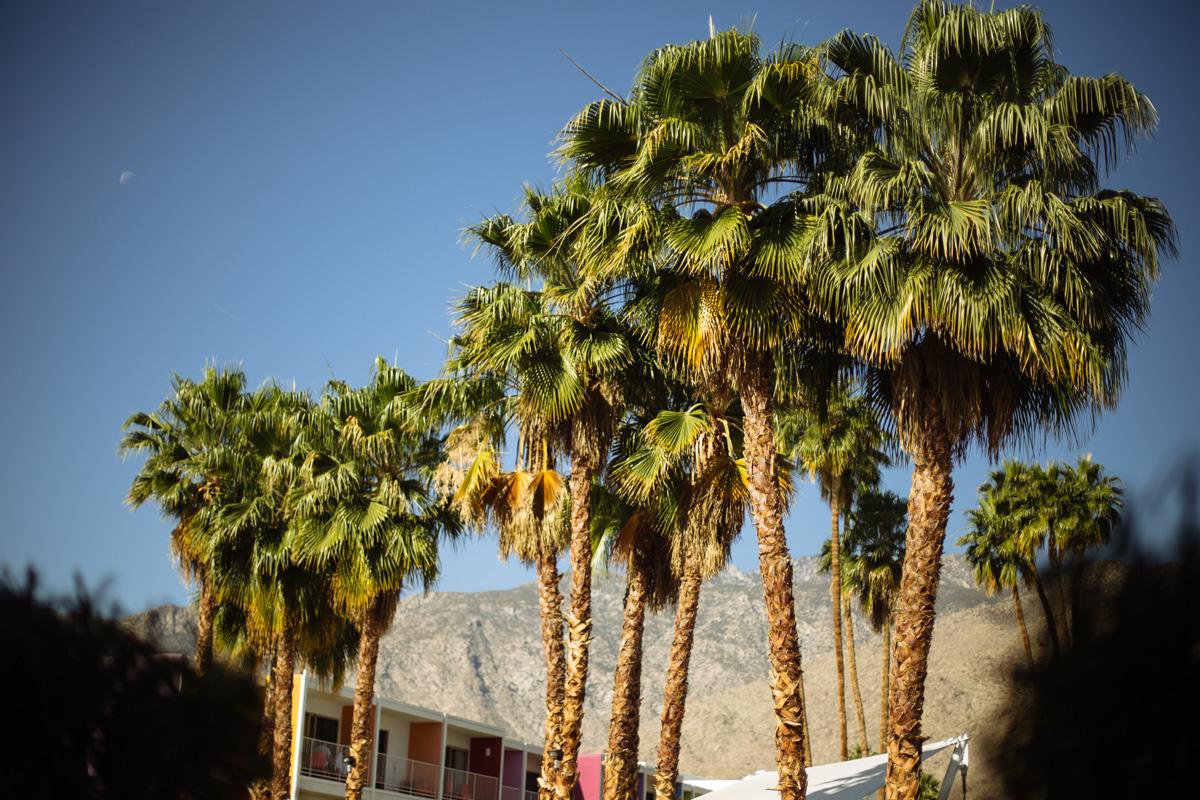 coachella-saguaro-decor-fashion-10.jpg