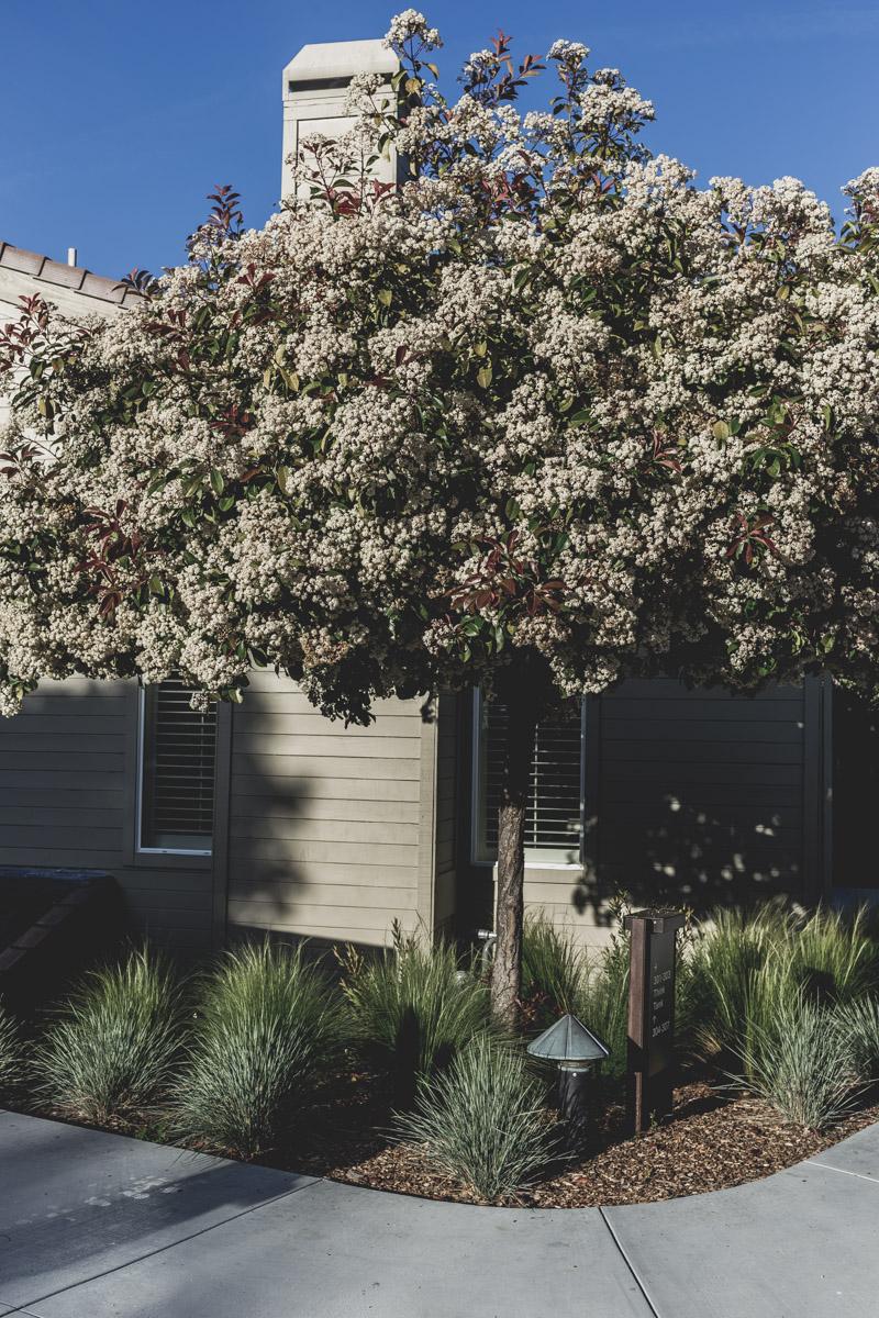 Back to Carmel Valley: A Soulful Retreat — MYBELONGING