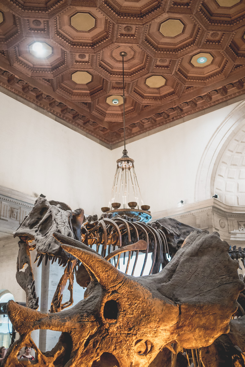 Dinosaur Hall Exhibit