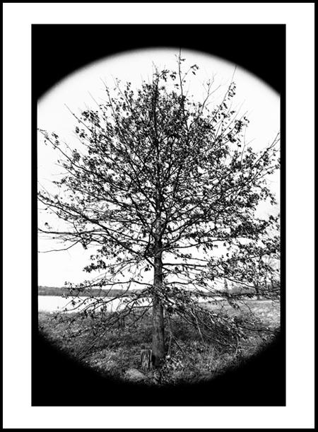 Tree1Positive.jpg