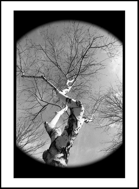 Tree2Positive.jpg