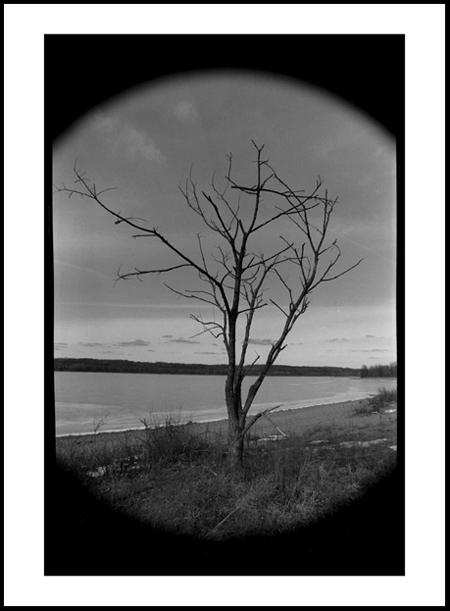 Tree4Positive.jpg