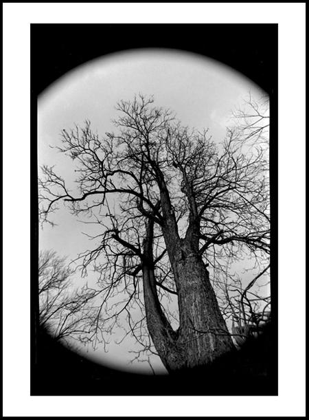 Tree6Positive.jpg