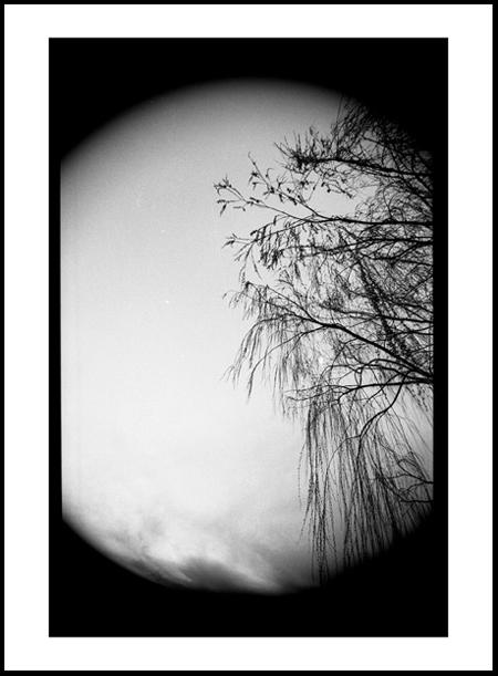 Tree10Positive.jpg