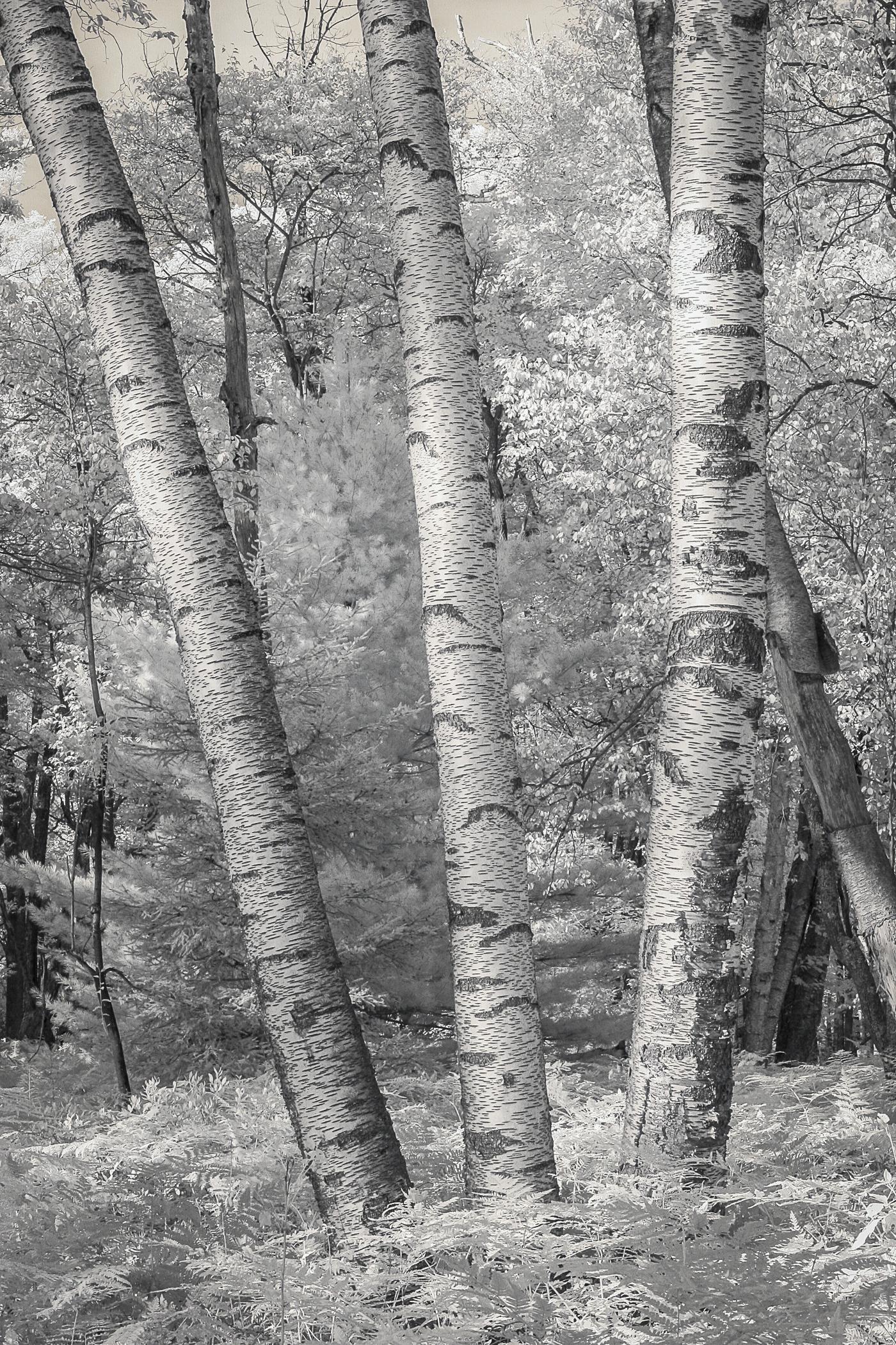 KendallInfraredLandscapes-4.jpg