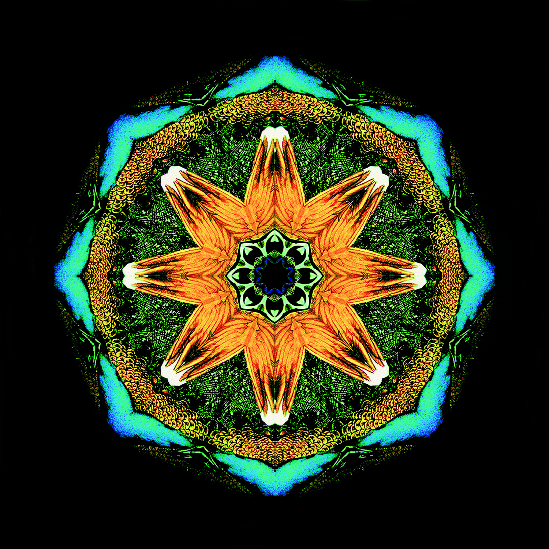 peacockwheel.jpg
