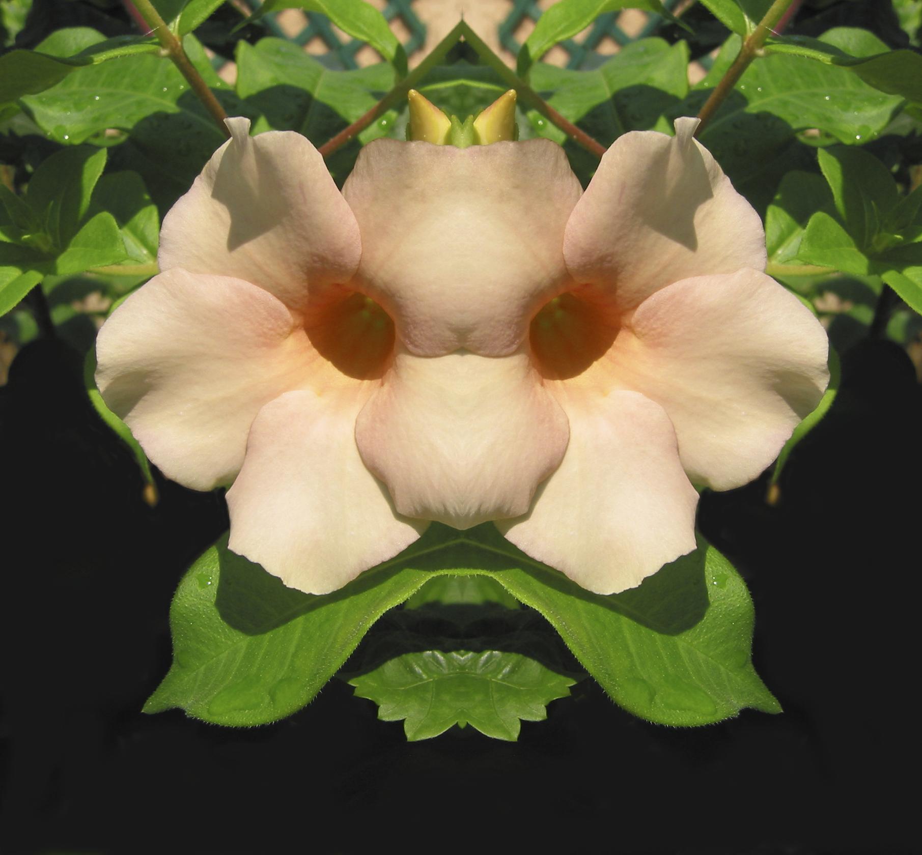 FlowerMaskConverted SRGB.jpg