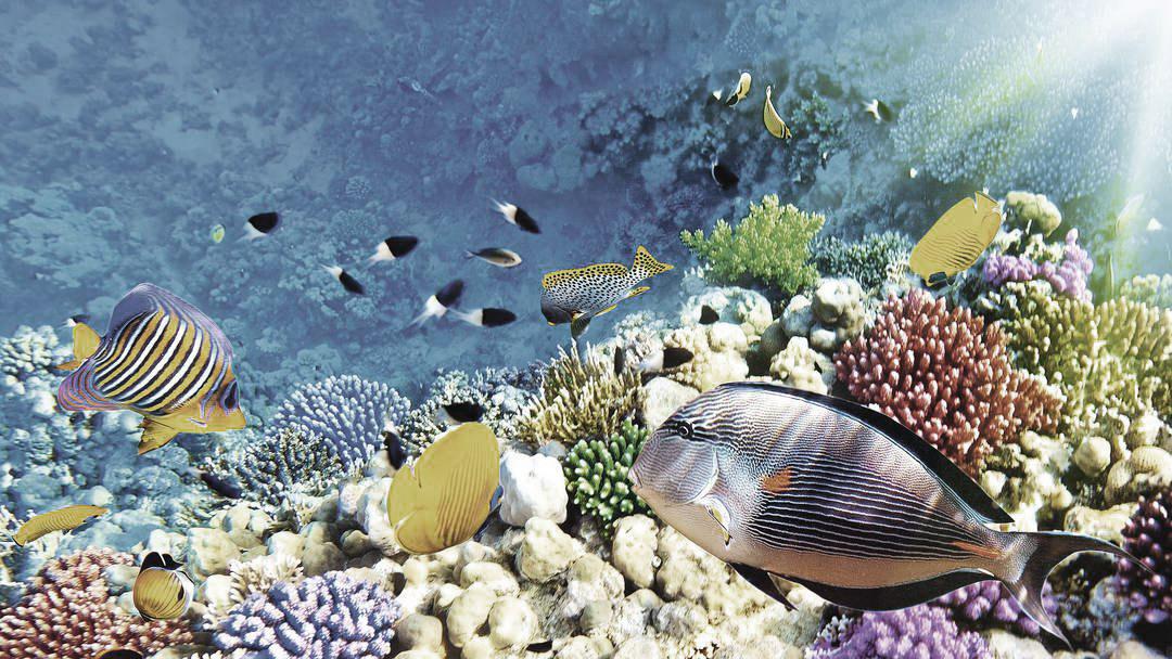 Car rental mauritius - diving