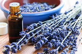 essential oil, lavender