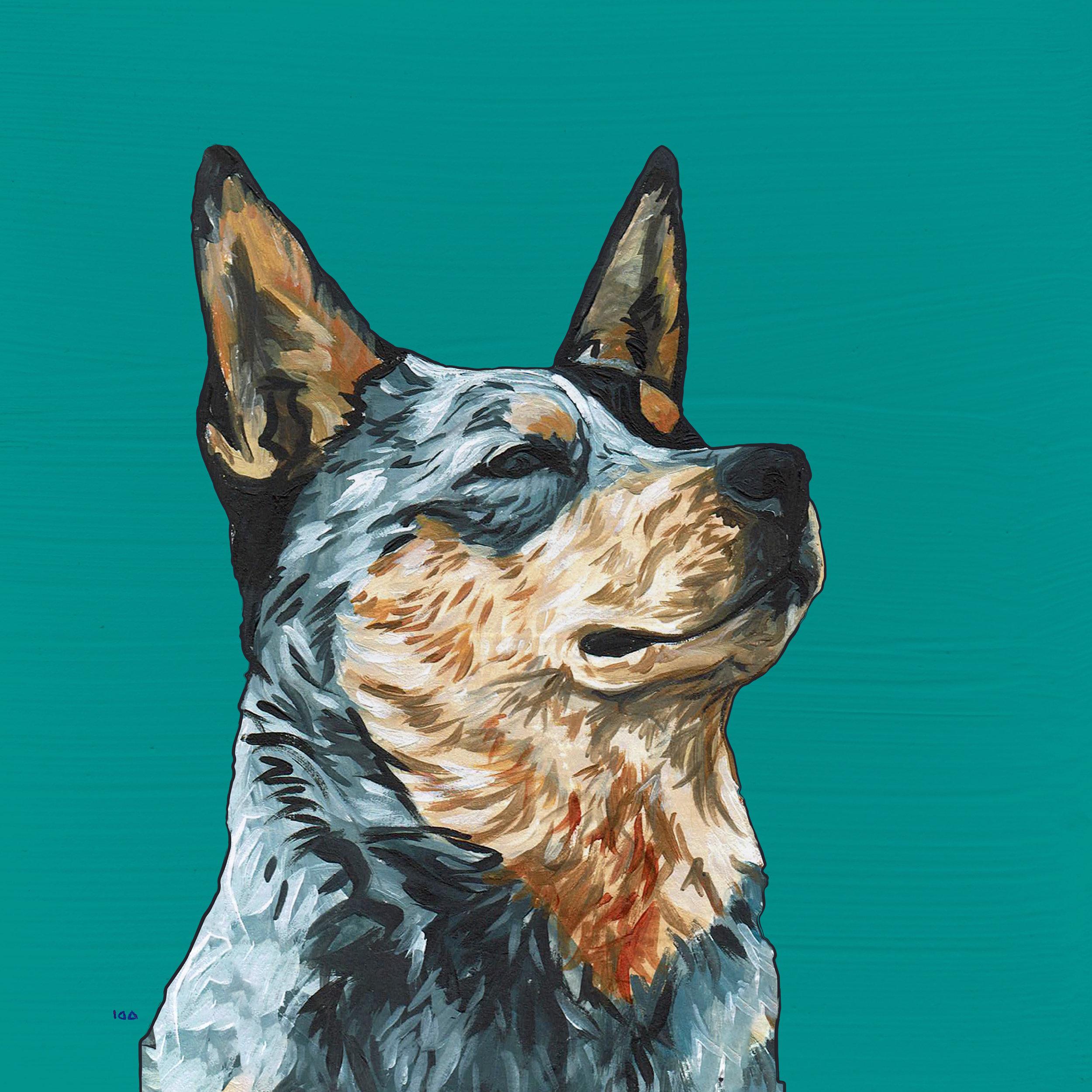 AUSTRALIAN CATTLE DOG -