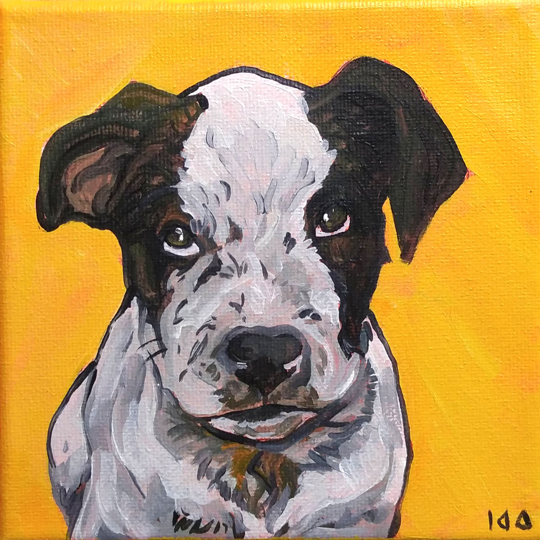 Dog457.jpg