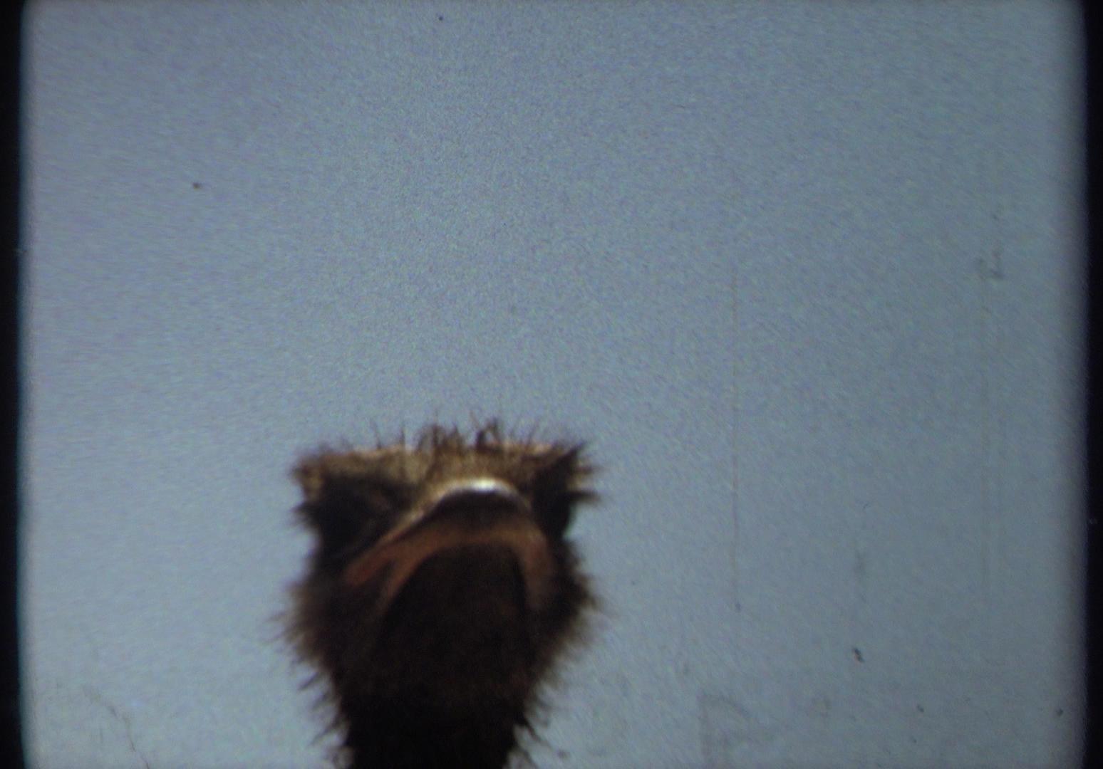 Anne Hollowday_Bird Watching_7.jpg