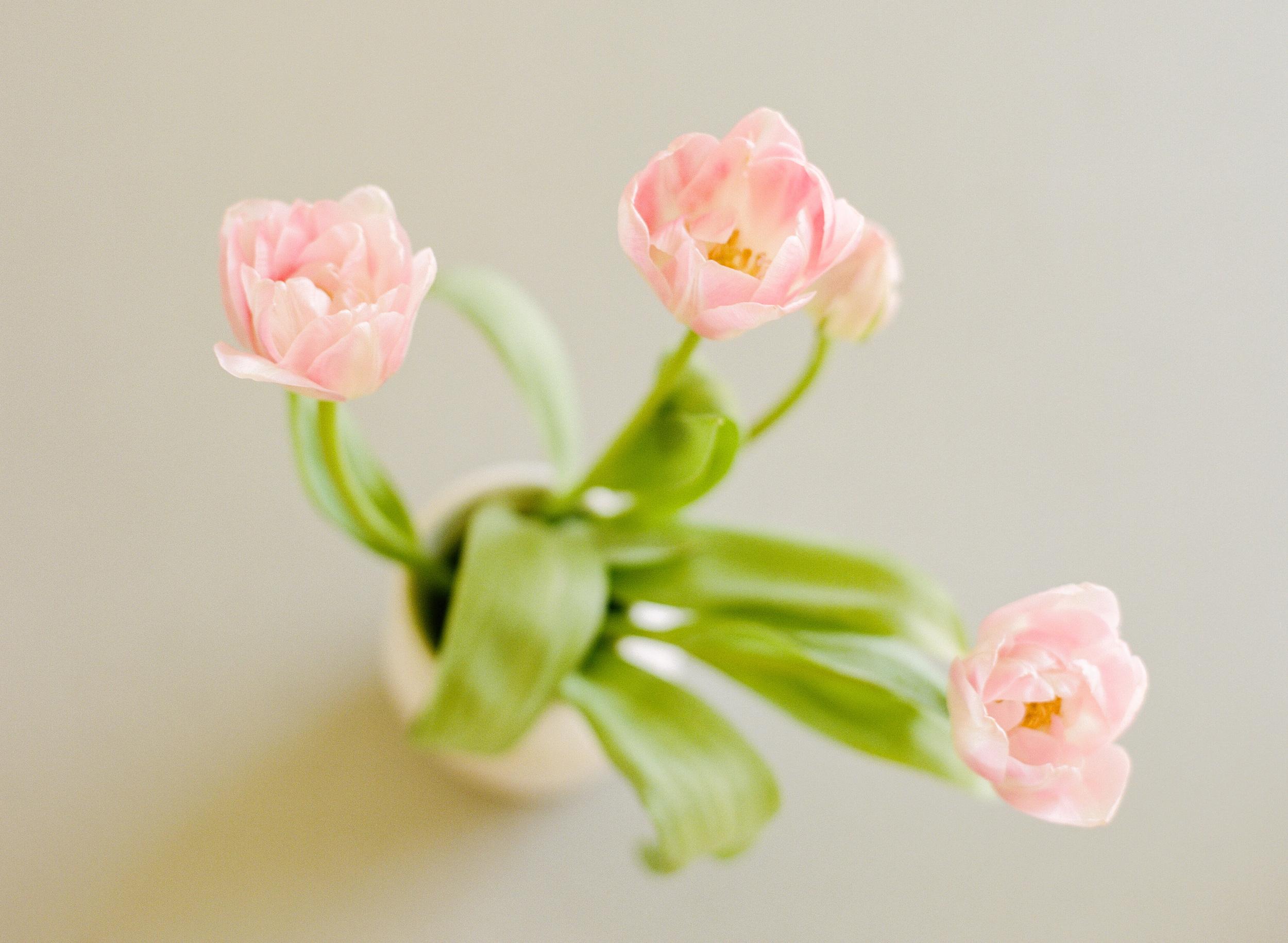 Andrea Naylor Photography Blossoms-000077520012 (1).jpg